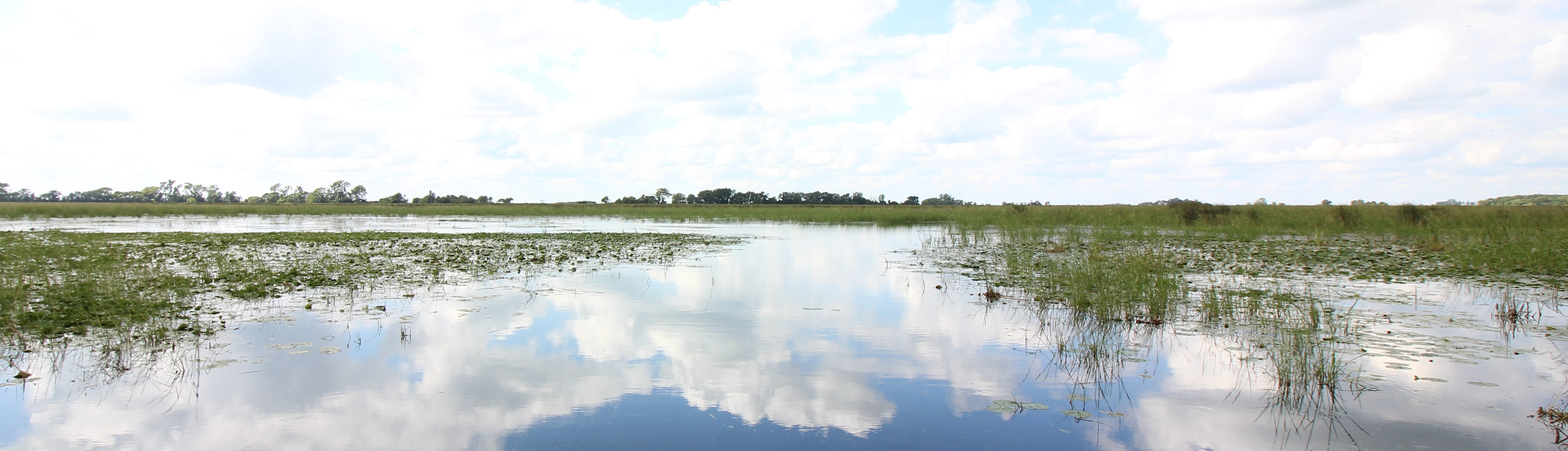 Iowa wetland