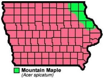 Mountain Maple Natural Resource Stewardship