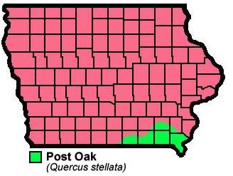 Post Oak Quercusstellata