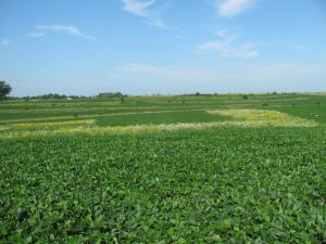 Prairie strips