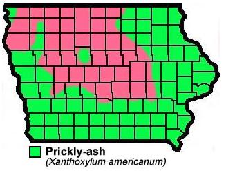Pricky Ash Zanthoxylum Americanum