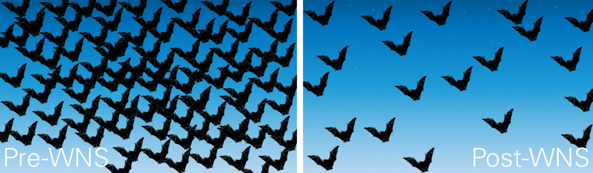 White nose syndrome before and after graphic