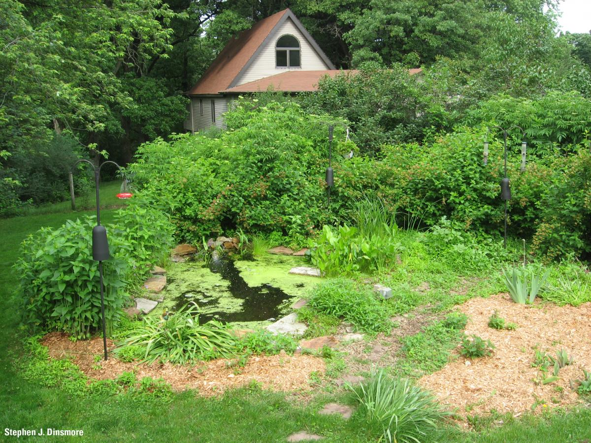 yard pond example