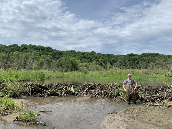 Beaver dam in summer, central Iowa