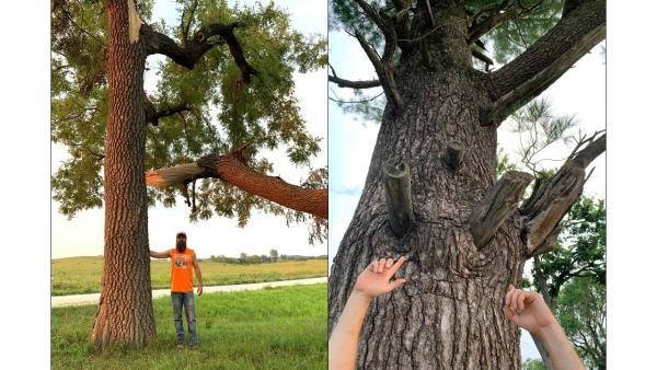 two images side by side, left Billy Beck standing next to large tree on roadside, right improperly cut branches with stumps sticking out of the side of the tree trunk