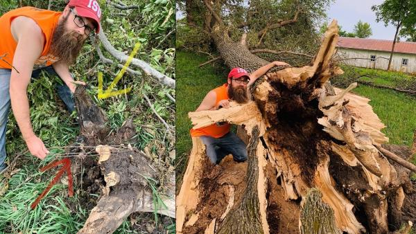 two images side by side, left Billy Beck holding portion of a downed tree, right Billy Beck standing next to giant base of tree that was completely toppled by the storm