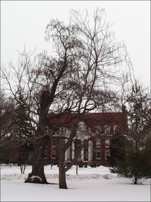 catalpa tree in winter with no leaves