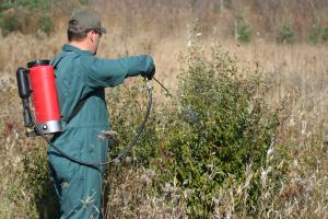 man applying foliar spray chemical to shrub