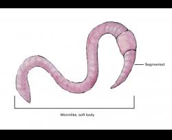 earthworm with segmented, wormlike, soft body