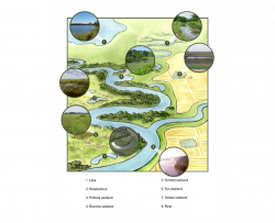 mock landscape showing types of aquatic ecosystems in Iowa