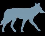coyote silhouette