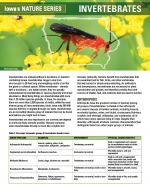 Invertebrates article