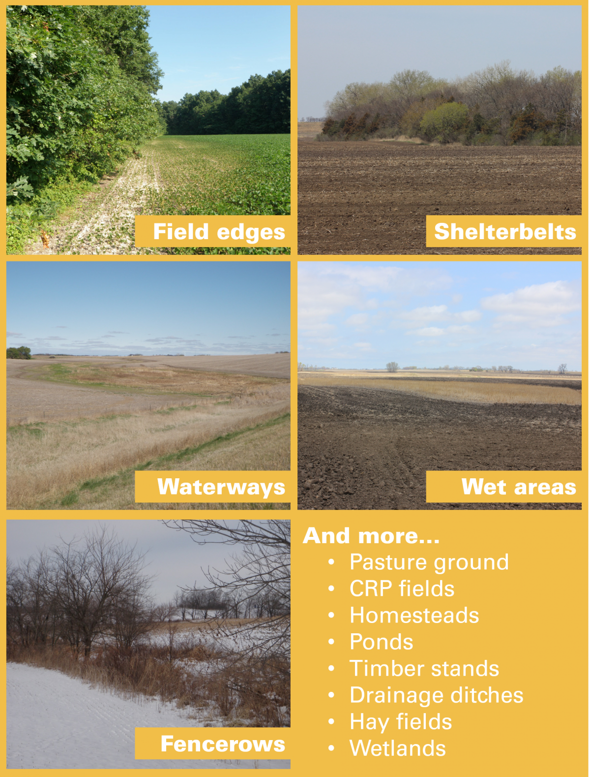 and more... pasture ground, CRP fields, homesteads, ponds, timber stands, drainage ditches, hay fields, wetlands