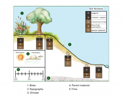Illustration showing the five soil forming factors climate, biota, time, parent material, and topography