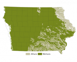 soil order map showing the two dominant soil orders in Iowa, with Mollisols covering the majority of the state and Alfisols existing primarily in the east and southeast