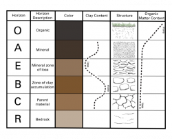 Table showing soil properties including color, clay content, structure, and organic matter organized by the horizon layers