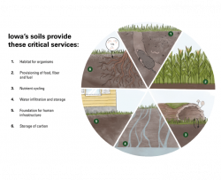 Pie chart showing the 6 primary ecosystem services provided by soil including (1) habitat, (2) provisioning of food, fiber, and fuel, (3) nutrient cycling, (4) water infiltration and storage, (5) foundation for infrastructure, and (6) carbon storage