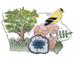 outline of Iowa around an oak tree, wild rose, geode, and American goldfinch