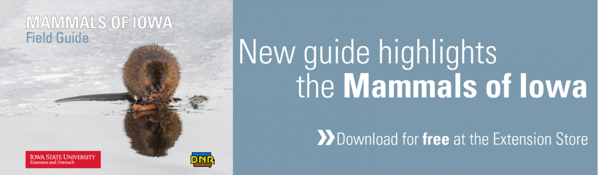 New guide highlights the Mammals of Iowa | Download for free at extension store