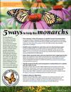 5 Ways to Help the Monarchs